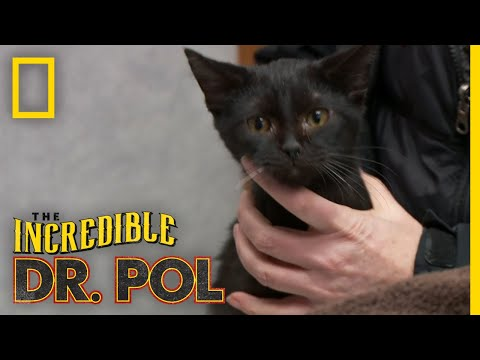 Two Rescued Cats Get a Check-Up | The Incredible Dr. Pol