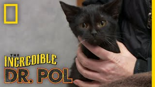 Two Rescued Cats Get a Check-Up | The Incredible Dr. Pol by Nat Geo WILD