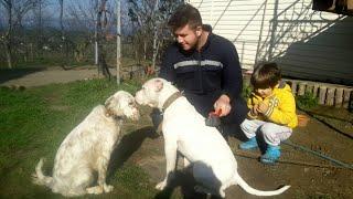 Köpeklerimizin Bakımlarını Yaptık Süslü Havaya Girdi 😄