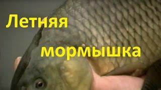Диалоги о рыбалке летней