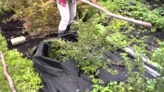 Борьба с сорняками видео