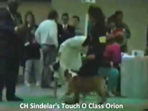 CH Sindelar's Touch O Class Orion