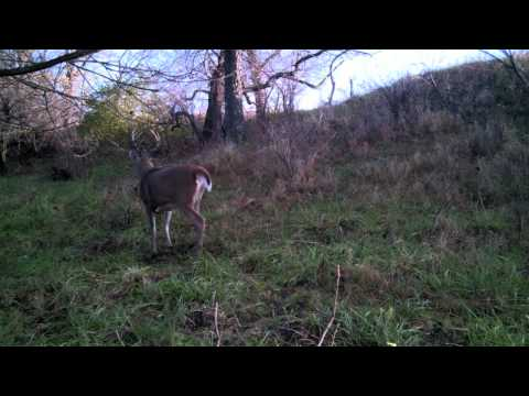 Proven Success of Buck Fever Synthetics F-Gland Scent