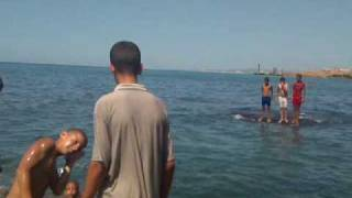 preview picture of video 'fouka marine tipaza فوكة تيبازة'