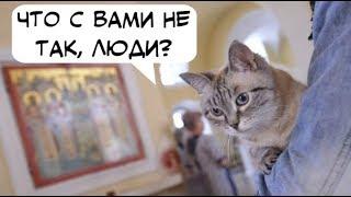 «Кошачий молебен»: позитивное нововведение или кощунственное заблуждение?