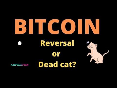 Bitcoin daily trading tūris