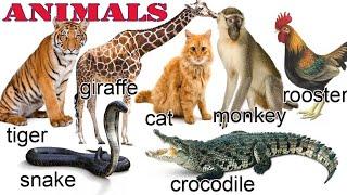 Nama Binatang Dalam Bahasa Inggris