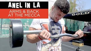 Anel Kadiric Working Arms & Back at the Mecca
