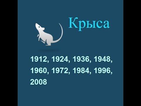 Год крысы, гороскоп составленный психологом Натальей Кучеренко.