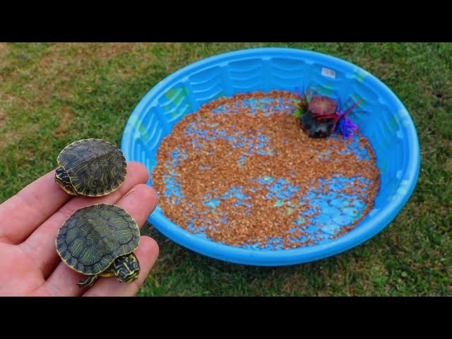Rescued BABY TURTLES get their  DREAM HOME!!