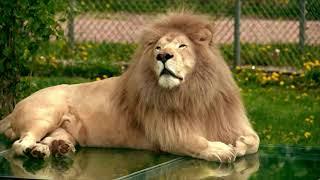 Parc Safari - Zoo - Over 500 Animals