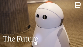Domestic Robots | The Future In Real Life