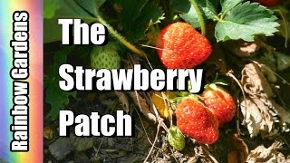 The Strawberry Patch - How I Made a Strawberry Patch
