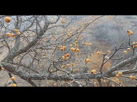 Горы Чарвак. Западный Тянь-Шань. Мраморный карьер. Красота горного мрамора. Часть 1