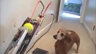 Funny Pet Moments