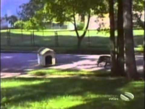 לקט מצחיק של פספוסים עם כלבים
