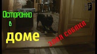 Масик ждал похвалы) прикол с собакой!!!