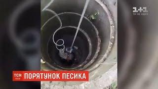 У протигазах в підземелля: у Дніпрі врятували песика, що провалився на 15-метрову глибину