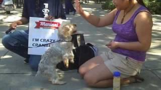 Handshaking Dog -- Mariani Crazy for Cranberries at UC Davis Picnic Day