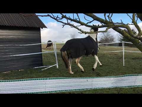 Der erste Tag für die Pferde auf der Weide in Seesbach