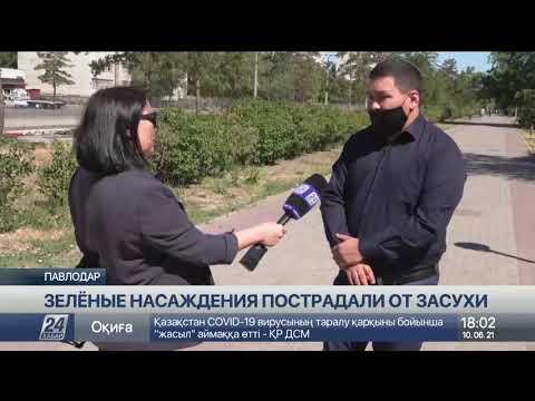 Павлодар рискует потерять статус зеленого города