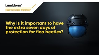Lumiderm, Extra 7 days protection for flea beetles