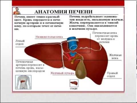 Диагностика и лечение хронических вирусных гепатитов