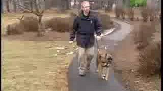 Boxer (Dog)