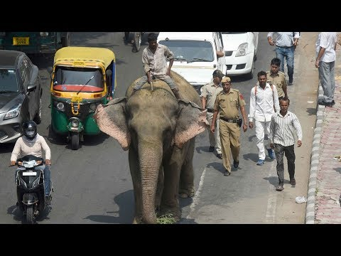 Cops find Delhi's last elephant Laxmi two months after it went missing