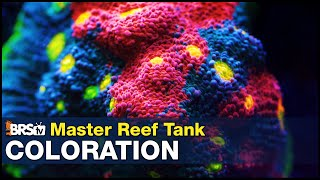 Master Coloration once and for all. Keep that coral fluorescence from the store and improve on it