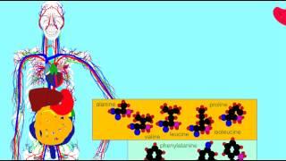 Enzymes - Pepsin