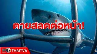 ข่าวสังคม : สุดช็อก ฉลามขาวตัวมหึมาพุ่งเข้ากัดกรงนักท่องเที่ยว ก่อนตายสลดต่อหน้า!