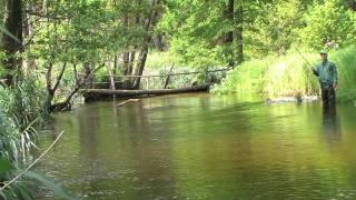 Запрещенные для ловли виды рыб в беларуси