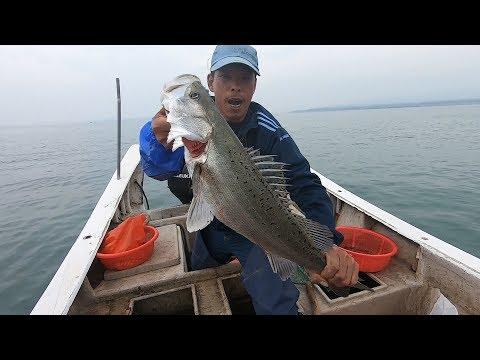 阿雄今天出海下血本,四箩筐排钩一次性抛下,路过的鱼群全被抓了