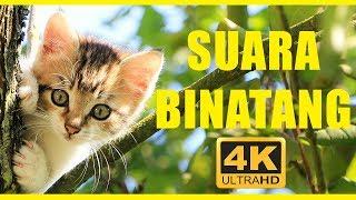 Suara Binatang 40 Menit | Hewan Untuk Anak-anak | Hewan Indonesia
