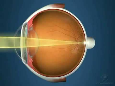 Глаза орган зрения берегите зрение