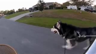 Tonka Goes On A Bike Ride ❤️!