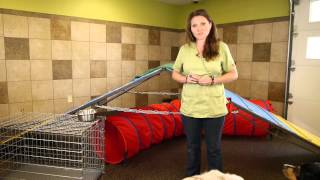 How to Prevent Fights Between Sibling Female Dogs : Dog Training