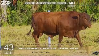 Coro 2305 b4