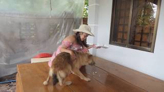 Beautiful girl feeding a smart god | How to feed your dog well