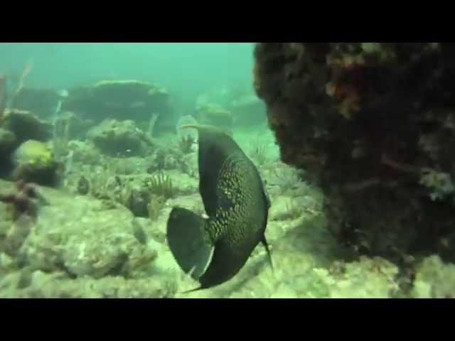 Fort Lauderdale Reef Dive, Florida - GoPro HD