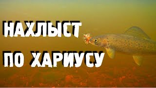 Хариус на малых реках сибири нахлыстом мушки