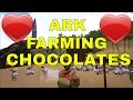 ARK Testing Dodo Chocolates Farm 86 Dodos Took 1 hour
