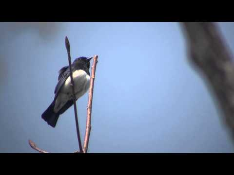 コンテンツ制作会社様へ野鳥の動画映像を貸し出します イメージ1