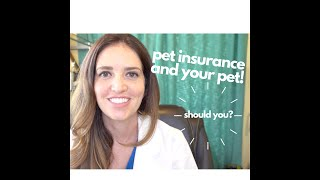 THE BEST Pet Insurance for Dogs and Cats