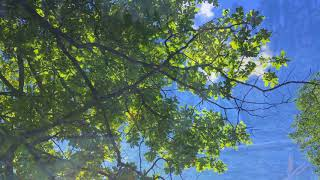 Dance Like Everyone is Watching  Raven Poetry Tree