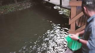 preview picture of video 'Taman Hutan Sungai Liang'