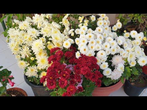 Today's Flowers In My Garden || My Winter Flower Garden || Fun Gardening