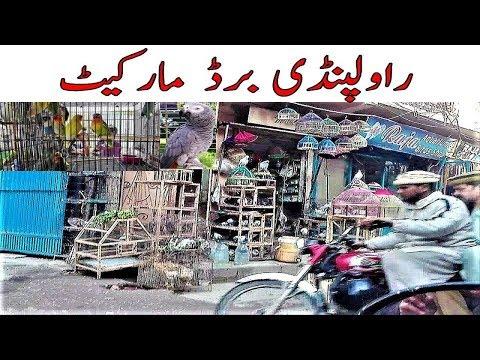 Karachi Lalukhait pigeons birds market Olx kabooter market