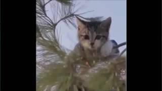 Приколы с котами И СОБАКАМИ 2017 ЕПИК МОМНТЫ # Fanny Fail Videos